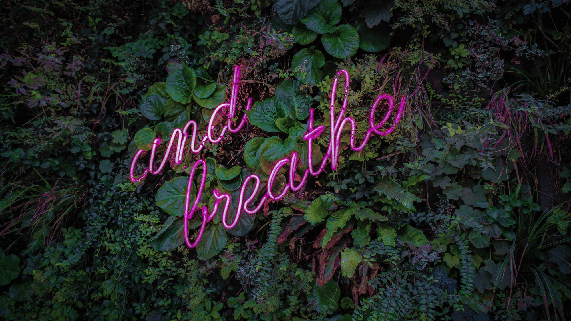 Leaves with the words and breathe inside of them